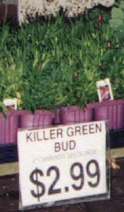 Killer Green Bud