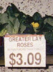 Greater Lay Roses