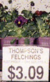 Thompson's Felchings
