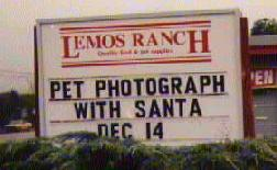 Pet Photograph With Santa